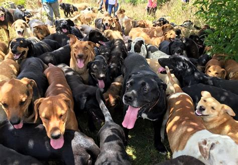 This stray dog paradise in Costa Rica is the ultimate zoo
